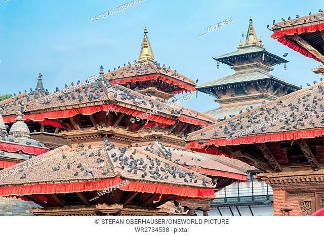 Nepal, Central Region, Kathmandu, pigeons on the roofs of the Jagannath Temple at Durbar Square in Kathmandu