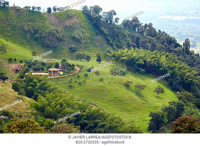 Guaduas, Coffee Cultural Landscape, Buenavista, Quindio, Colombia, South America