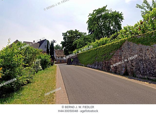 Vineyard, entrance to the town, Gleisweiler Germany