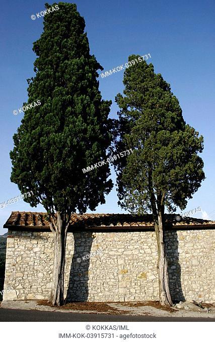 Trees in front of house , San Gimignano, Tuscany, Italy, Europe