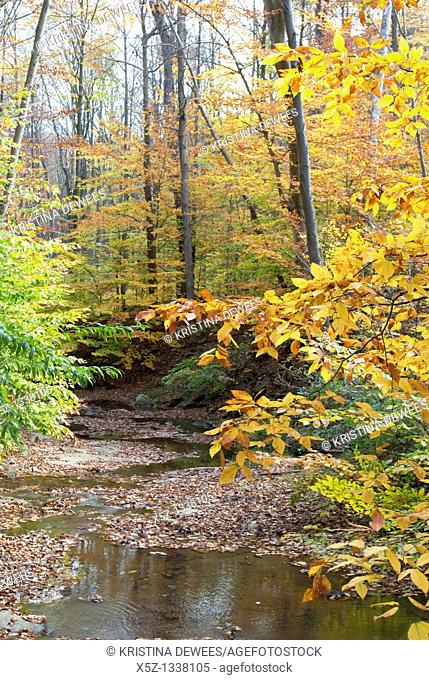A stream along the Blue Hen Falls trail in the Fall