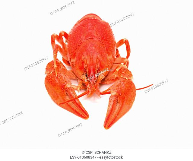 red crayfish on a white background
