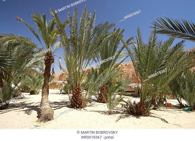 oasis Ain Khudra