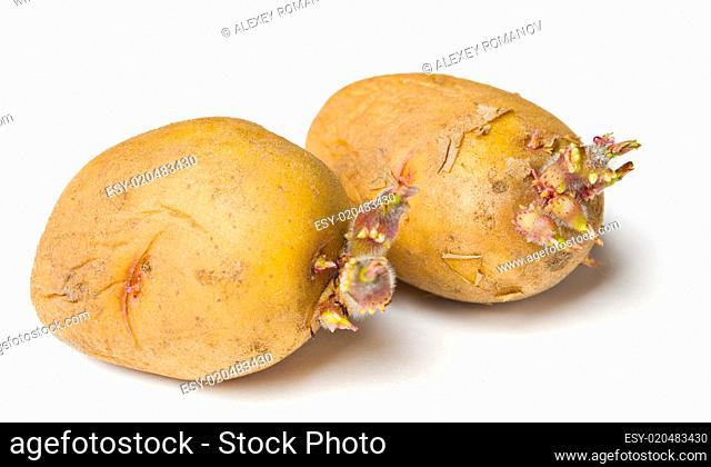 Potato seeds on white background
