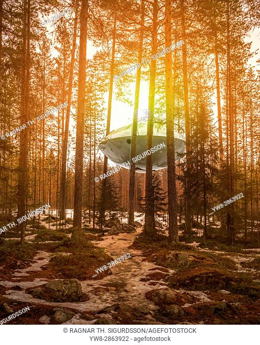 Accommodation in the woods, known as The UFO at the Tree Hotel in Lapland, Sweden