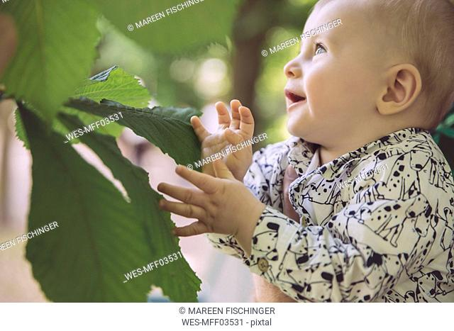 Baby touching large leaf of chestnut tree