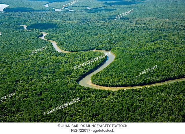 Rainforest and Kinabatangan River, Sabah, Borneo island, Malaysia