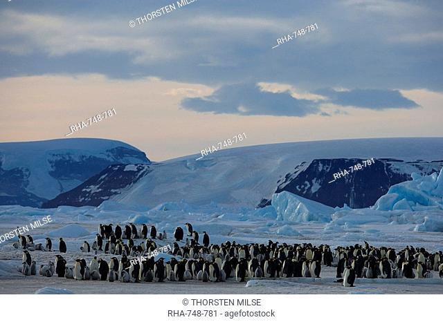 Colony of Emperor penguins Aptenodytes forsteri, Snow Hill Island, Weddell Sea, Antarctica, Polar Regions