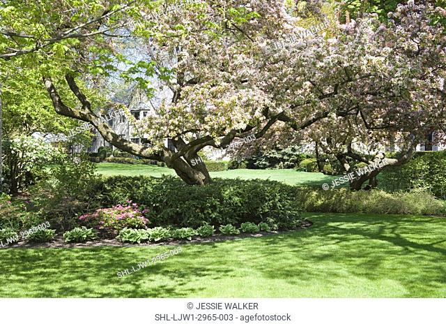 GARDEN: SPRING : white flowering trees, plantings surround base