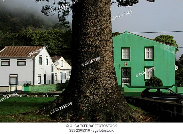 Houses and a giant tree in Sete Cidades, Sao Miguel island, Azores, Portugal