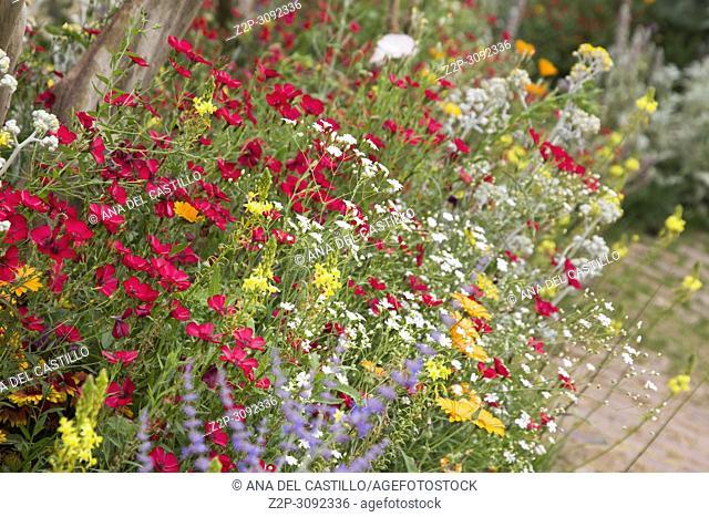 Beautiful wildflowers growing in garden Valencia Spain