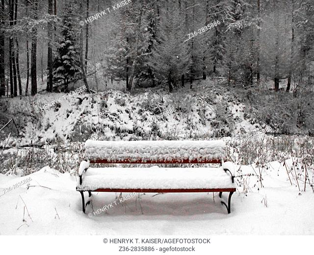 Lonely bench in a forest at winter