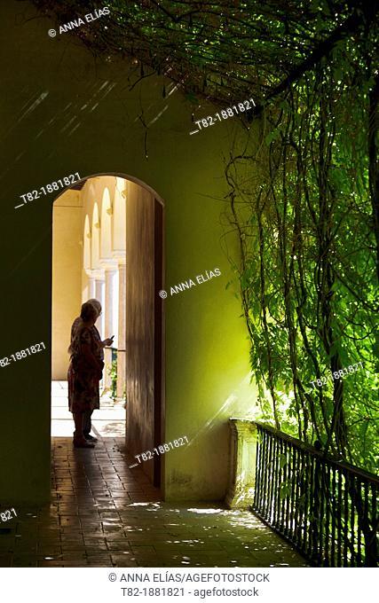 herb garden silhouette between the Alcazar of Seville, Alcazar, Sevilla, Andalucia, Spain
