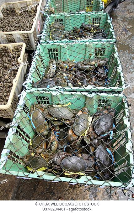 Mud crabs for sale at Pemangkat fish market, West Kalimantan, Indonesia