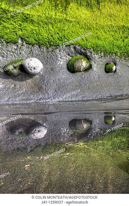 Boulders embedded in algae covered sea cliff, reflection in black sand, Tongaporutu, North Taranaki
