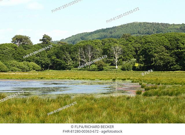 View of freshwater marsh, pool and woodland habitat, Ynys-hir RSPB Reserve, Ceredigion, Wales, june