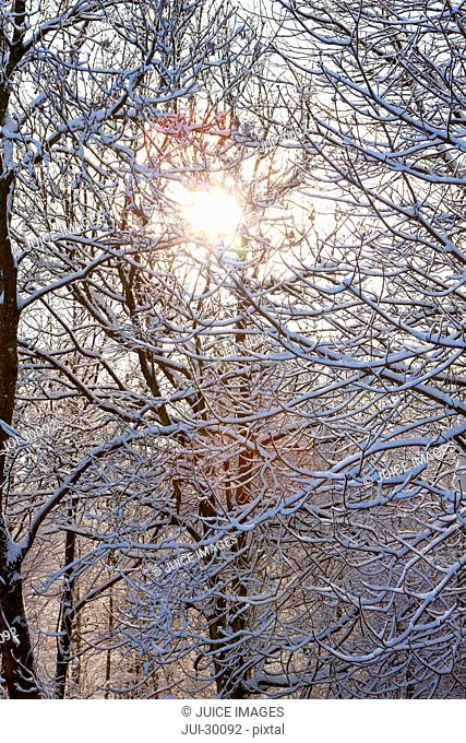 Sun shining through snow covered tree branches