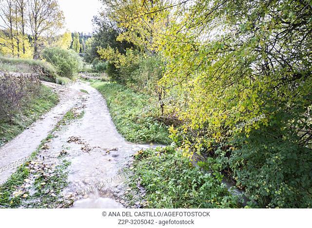 Autumn poplars in Alcala de la Selva Teruel Aragon Spain