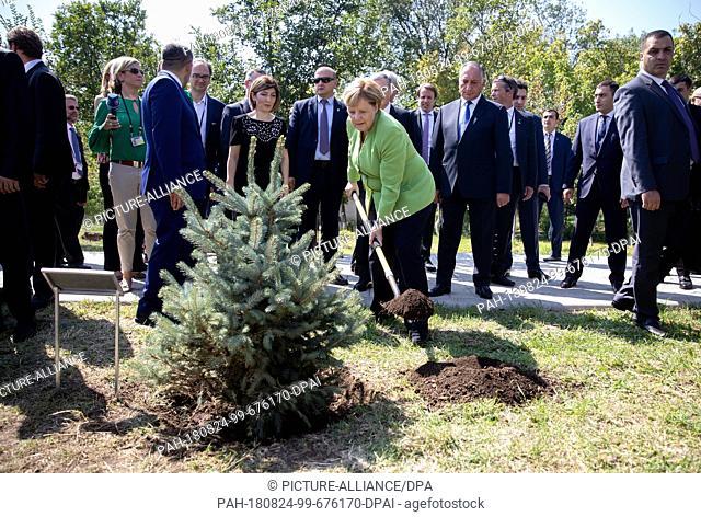 24 August 2018, Armenia, Yerevan: German Chancellor Angela Merkel (CDU) plants a fir tree in the Tsitsernakaberd Memorial