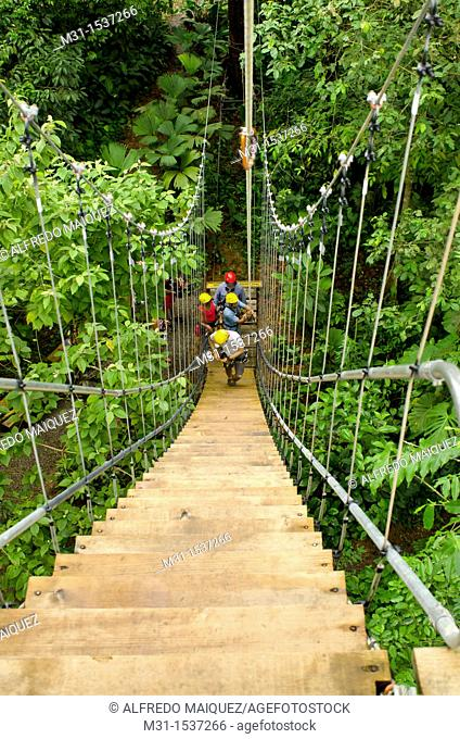 People starting a canopy tour at a wooden hanging ladder  Bastimentos Sky canopy center, Bocas del Toro, Panama, Central America