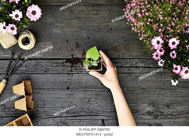 Woman's hand hold seedling