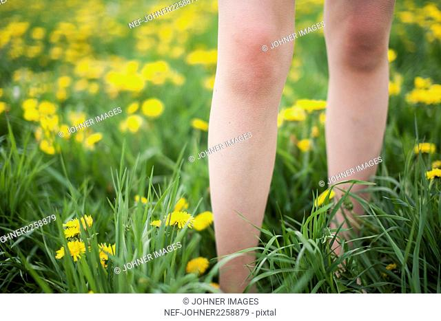 Bare legs and daffodils