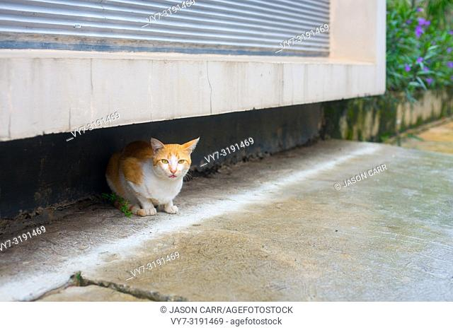 A Stray Cat on the street in Jackarta city, Indonesia. Jakarta is the biggest and main city in Indonesian islands