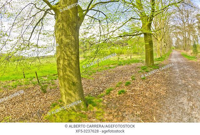 Strijbeekse Heide Nature Area, Noord-Brabant Province, Holland, Netherlands, Europe