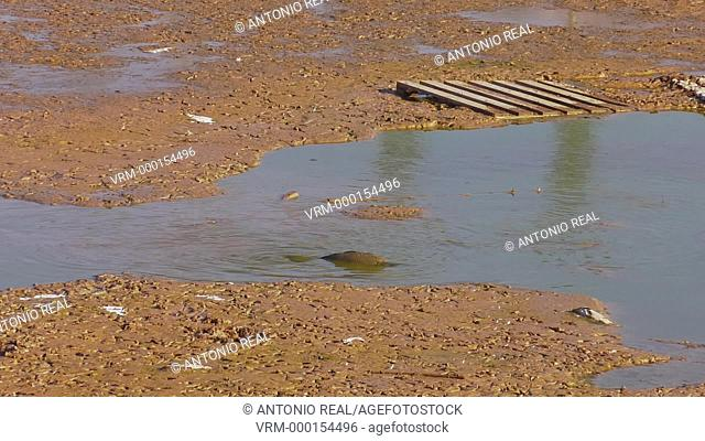 drought. swamp of Almansa. Albacete province