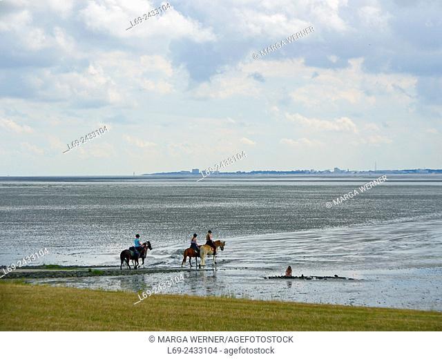Horses in Wadden Sea at Island Neuwerk, Elbe estuary, North Sea, Hamburg, Germany