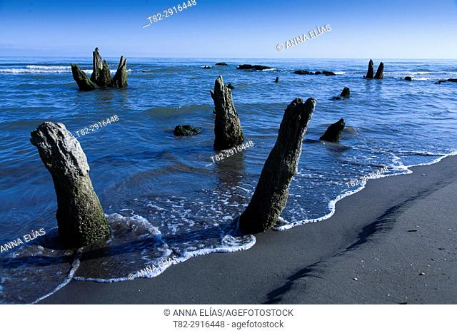 Landscape of dead tree trunks under the sea, The Camargue, France