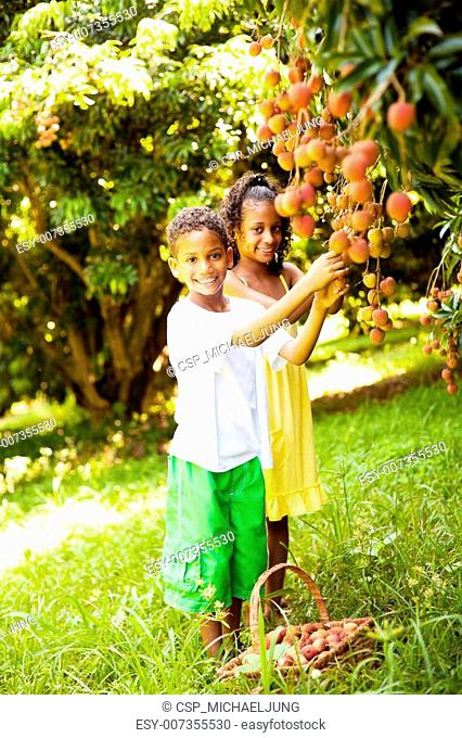 kids picking litchis in orchard