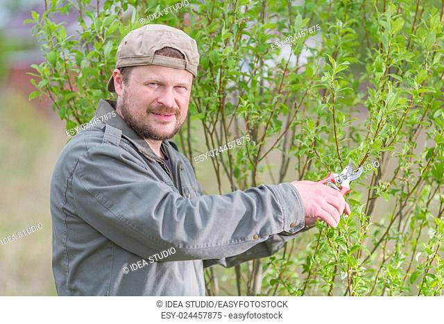 Gardener man pruning the tree in his garden