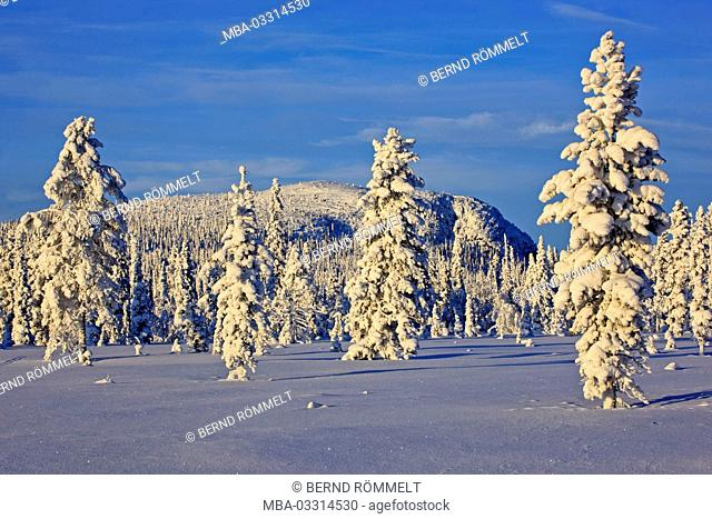 Sweden, Swedish Lapland, Laponia, winter scenery, trees