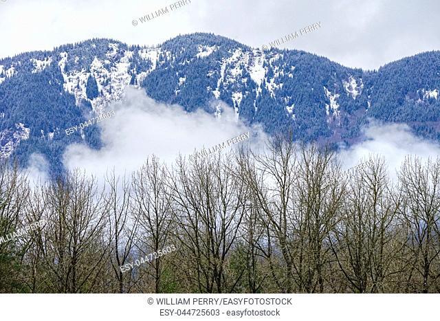 Trees Snow Mountains Colors Winter Washiington State