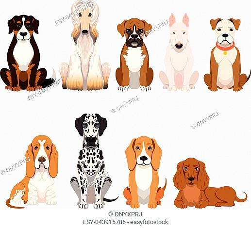 Different breeds of dog. Group of domestic animals in cartoon style. Vector illustrations set domestic dogs breed, collection of adorable character friends