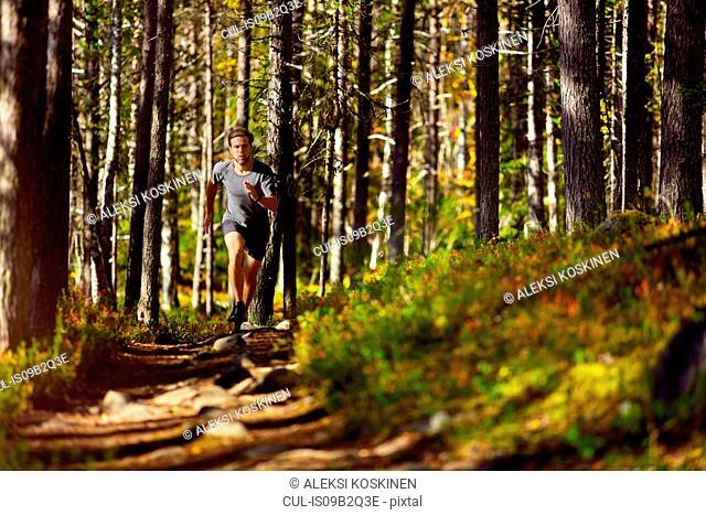 Man running in forest, Keimiotunturi, Lapland, Finland