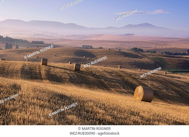 Italy, Tuscany, Bales of straw on harvested corn fields
