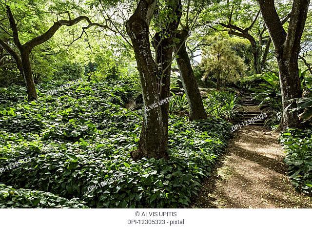 Pathway in Allerton Garden, part of National Botanical Garden near Poipu; Kauai, Hawaii, United States of America