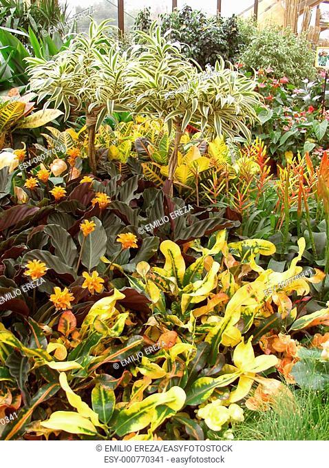 Houseplants in a garden center