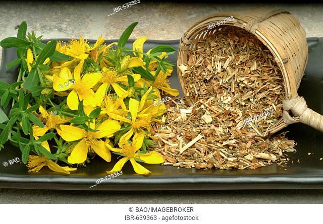 St. John's Wort or Tipton's Weed (Hypericum perforatum), medicinal herb