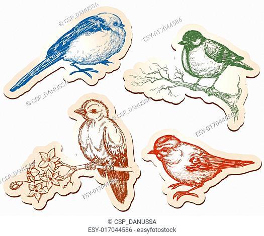 Vector birds collection