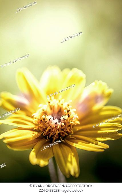 Instagram style nature picture of an autumn wildflower on green grass background. Floral sunlight