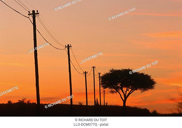 Acacia tree next to telephone poles at dawn, Northern Cape near Upington, South Africa
