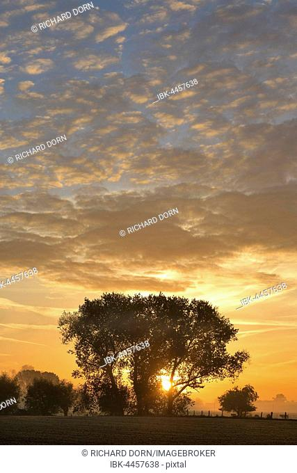 Sunrise behind trees in autumn, Rheinberg, North Rhine-Westphalia, Germany