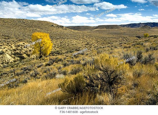 Lone tree in fall on range lands near Cody, Wyoming