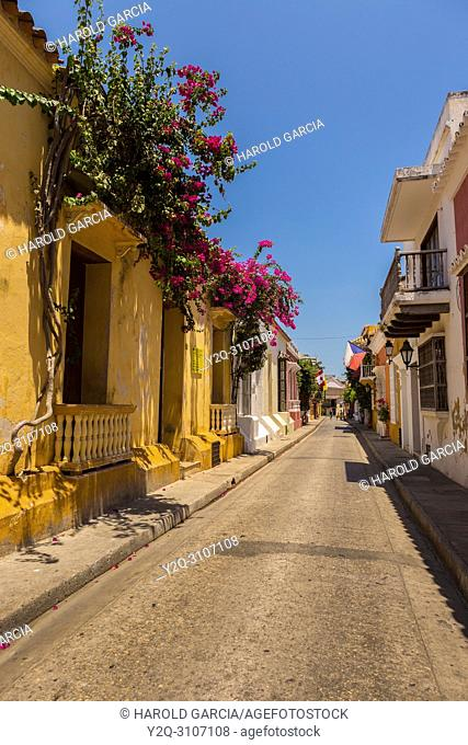 Beautiful houses with large doors, big windows and green foliage n the ancient walled city of Cartagena de Indias. Historical patrimony of the humanity for the...