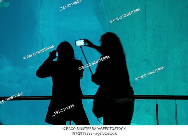 People photographing fish in the aquarium, Barcelona, Spain