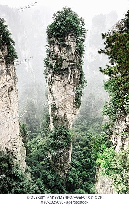 Mountain spire covered in trees at Zhangjiajie National Forest Park, Zhangjiajie, Hunan, China
