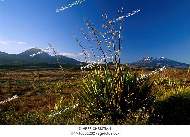 Mount Ruapehu, nature, New Zealand, north island, park, plants, scenery, landscape, steppe, Tongariro national, volc